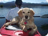 doggie day care frisco co