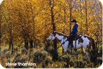 fall-horseback-riding-vail-co