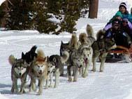 dog-sled-keystone189